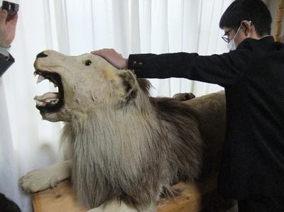 熊のはく製を触る様子