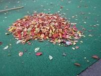 中庭の落ち葉がたくさんありました