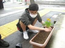 土をやさしく両手で押さえて植え替え